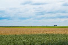 Wheat Field landscape multiple colors Stock Image