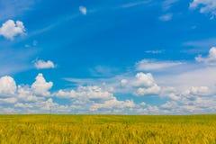 Wheat Field. Landscape with wheat field, Romania Stock Photo