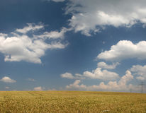 Wheat field in late summer. With clouds stock photo