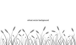 Wheat field line border isolated on white. Royalty Free Stock Image