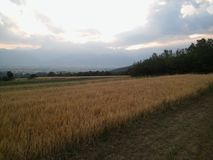 Wheat field in Macedonia Stock Image