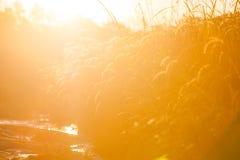 Wheat field on morning sunrise Stock Photography