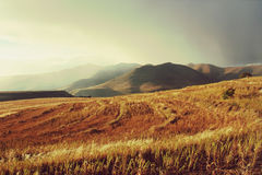 Wheat field in mountains before thunderstorm Royalty Free Stock Photos