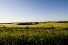 Wheat Field. Near Drumheller, Alberta Royalty Free Stock Photography