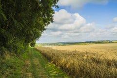 Wheat field. Near Etretat Normandy Stock Photos