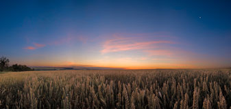 Wheat field at the night Stock Photography