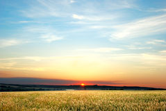 In the wheat field at the night. In the wheat field at the sunset Royalty Free Stock Photos