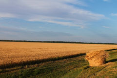 Wheat Field with Non-Conforming Hay Bale. Wheat field ready for harvest with hay bale that has exploded in a creative way Stock Photos