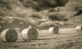 Wheat field in Nyon Switzerland. Bales of hay drying on the field, black and white Stock Photography