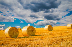 Wheat field in Nyon Switzerland. Bales of hay drying on the sunny field Royalty Free Stock Photography