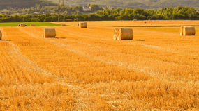 Wheat field in Nyon Switzerland. Bales of hay drying on the sunny field Stock Images