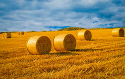 Wheat field in Nyon Switzerland. Bales of hay drying on the sunny field Royalty Free Stock Images