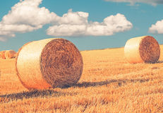 Wheat field in Nyon Switzerland. Bales of hay drying on the sunny field Stock Image