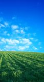 Wheat field over beatiful blue sky 2 Royalty Free Stock Photography