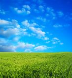 Wheat field over blue sky Stock Photography