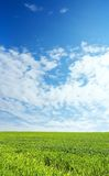 Wheat field over blue sky. Wheat field over beautiful blue sky 4 Stock Images
