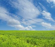 Wheat field over blue sky. Wheat field over beautiful blue sky 3 Royalty Free Stock Photo