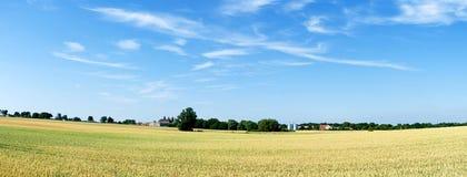 Wheat field. Panorama. Royalty Free Stock Photography