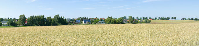 Wheat field. Panorama. Royalty Free Stock Photos