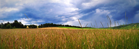 Wheat field panorama view Royalty Free Stock Images