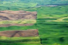 Wheat field pattern Stock Photography