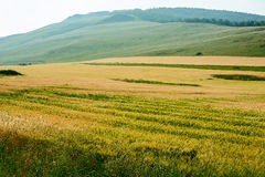 The Wheat field Stock Image