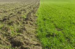 Wheat field and plowed land. Field of young green wheat and plowed land in spring season Royalty Free Stock Photos