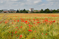 Wheat field with poppies in Chatellerault city, France Royalty Free Stock Photography