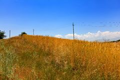 Wheat field and power lines Royalty Free Stock Image