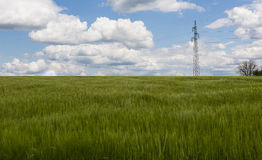 Wheat field and power tower Stock Photo