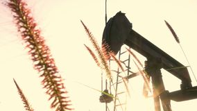 Wheat field with pump jack unit stock video footage