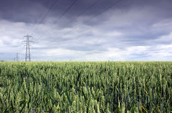 Wheat Field and Pylon royalty free stock images