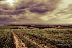 Wheat field. Rainy sky over a wheat field Royalty Free Stock Photos