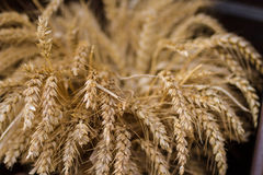 Wheat field ready for harvest Stock Images