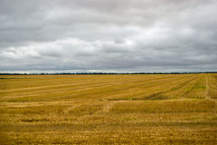 Wheat field, the reaped crop. Big field with straw, the reaped crop. And the sky with clouds over him Stock Photography