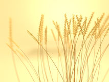 Wheat Field. A render of a wheat field with depth of field Stock Photo