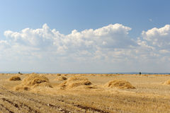 Wheat field with ricks. Landscape with blue sky. Field with wheat ricks. Landscape with blue sky Royalty Free Stock Photography