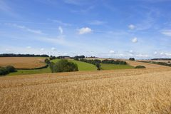 Wheat field and scenery Stock Images