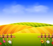 Wheat field scenery Stock Images