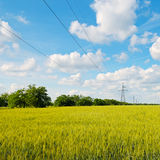 Wheat field,  sky and power lines Stock Photography