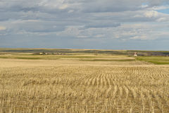 Wheat field and small village in Canadian Prairies Stock Photography