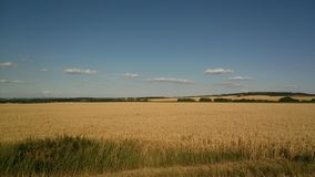 Wheat field in South Moravia stock image