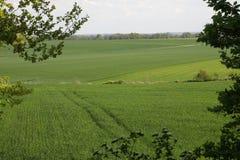 Wheat field in spring. Wheat field in Oise, Picardie region of France royalty free stock image