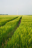 Wheat field in spring at wind turbine Stock Image