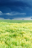 Wheat field before the storm Stock Image
