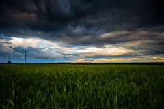Wheat field after storm. Wheat field at sunset after a storm Stock Image