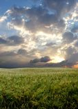 Wheat field during stormy day. 2 Royalty Free Stock Images