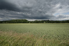 Wheat field and stormy sky. In Aisne, Picardie region of France royalty free stock images