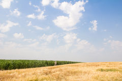Wheat field by summer day Stock Images