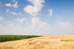 Wheat field by summer day Royalty Free Stock Photography